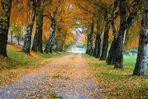 Der Herbst kommt 4