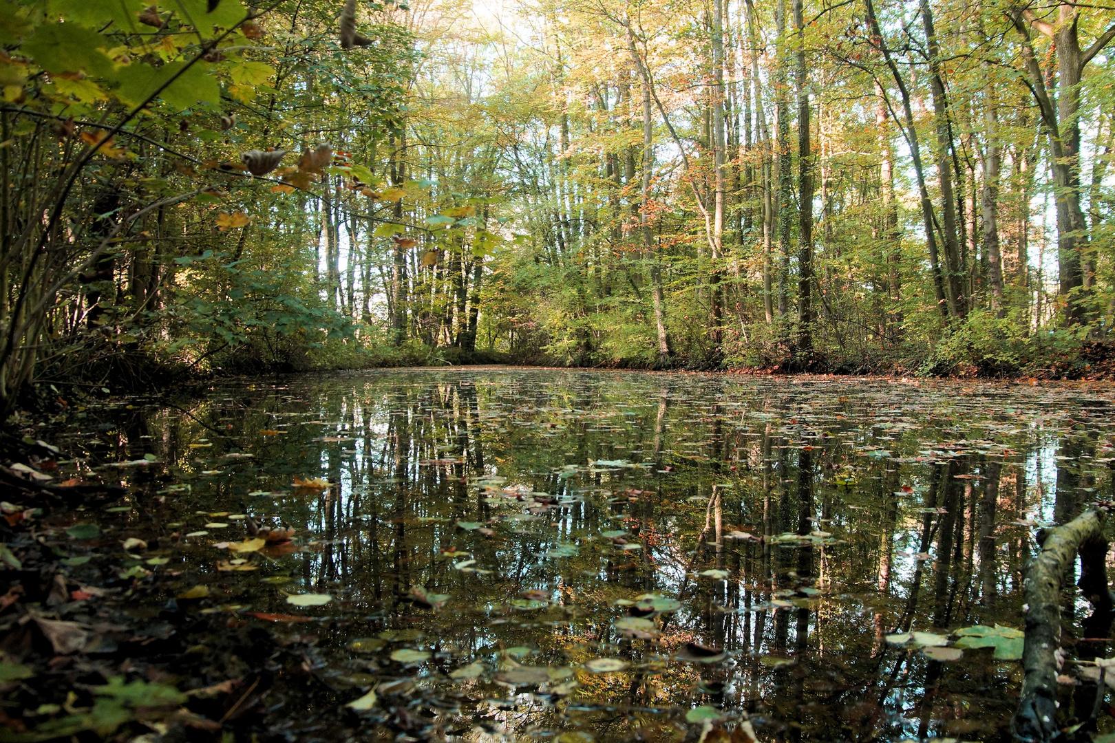 Der Herbst kommt - auch am Waldsee ...