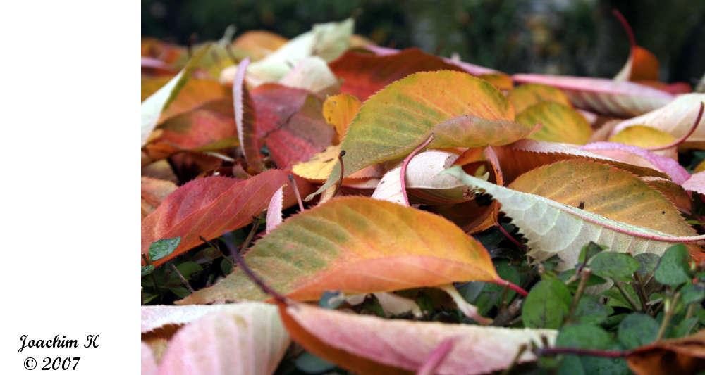 Der Herbst kommt bestimmt