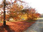 Der Herbst kommt....