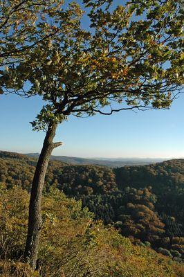 Der Herbst kommt ins Siebengebirge