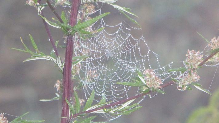 Der Herbst kommt mit Nebel in riesen Schritten