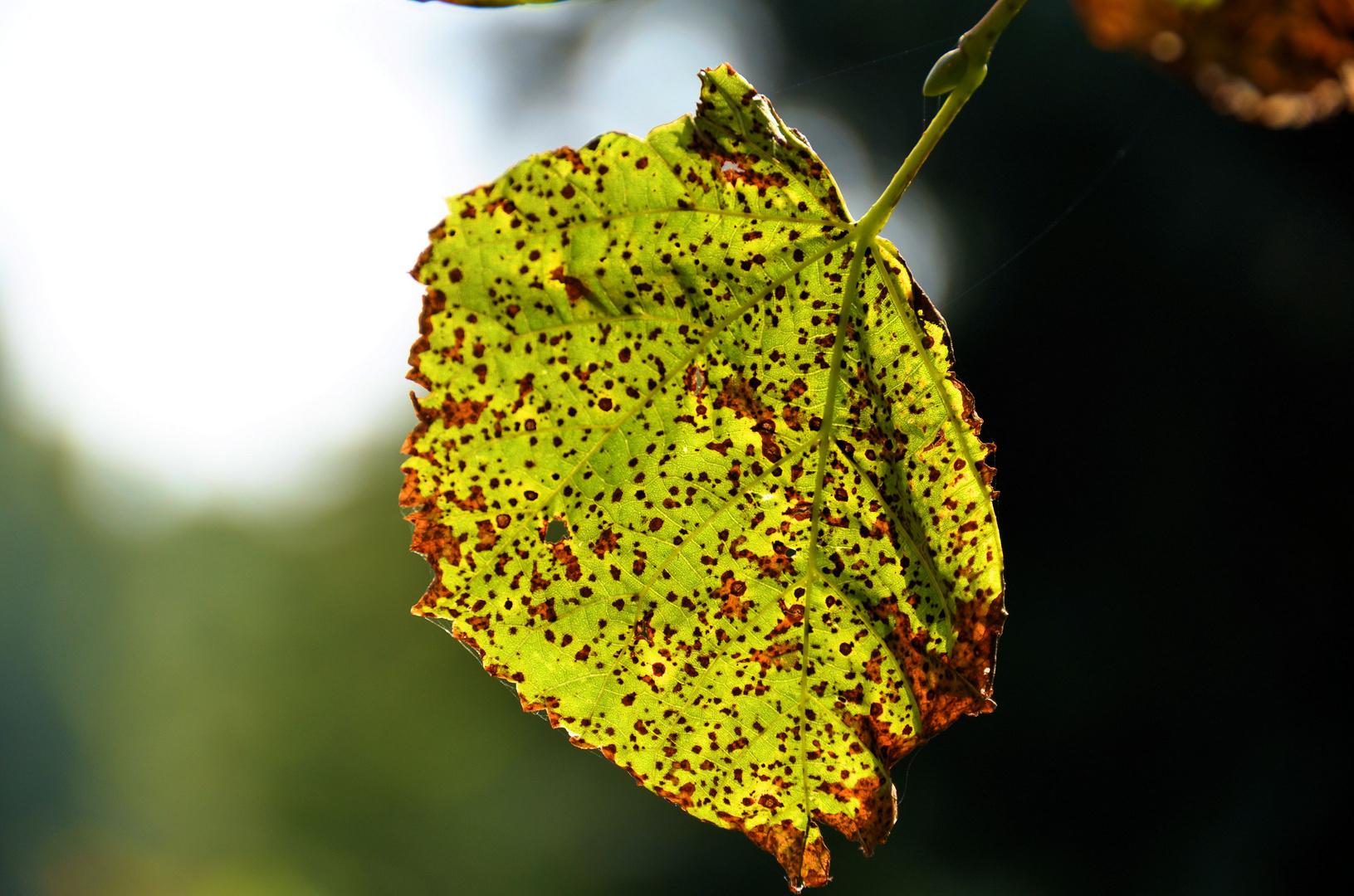 Der Herbst kommt näher