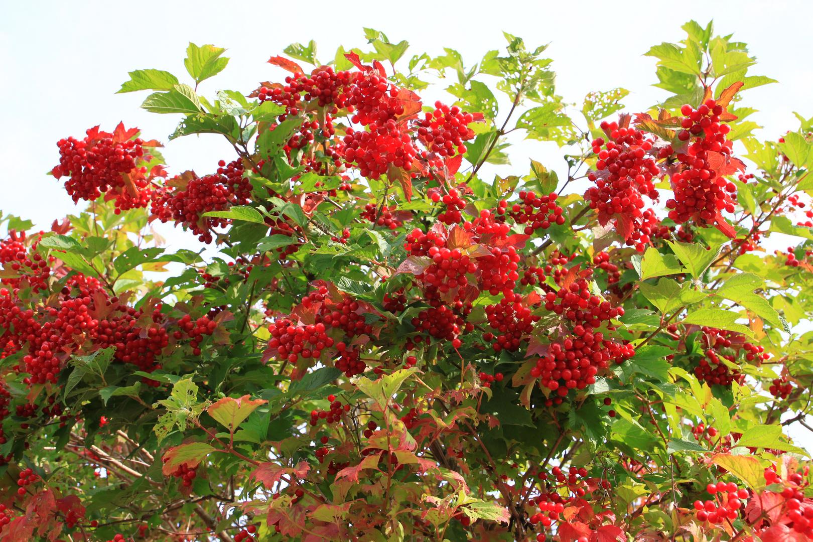 - Der Herbst kündigt sich an...