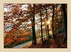 Der Herbst lässt grüßen...