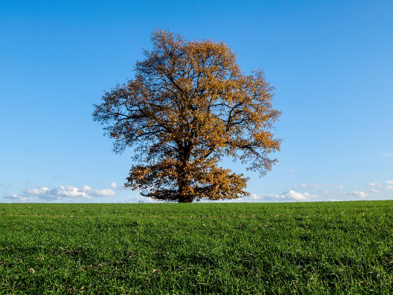 Der Herbst lässt grüßen oder der Baum im Oktober