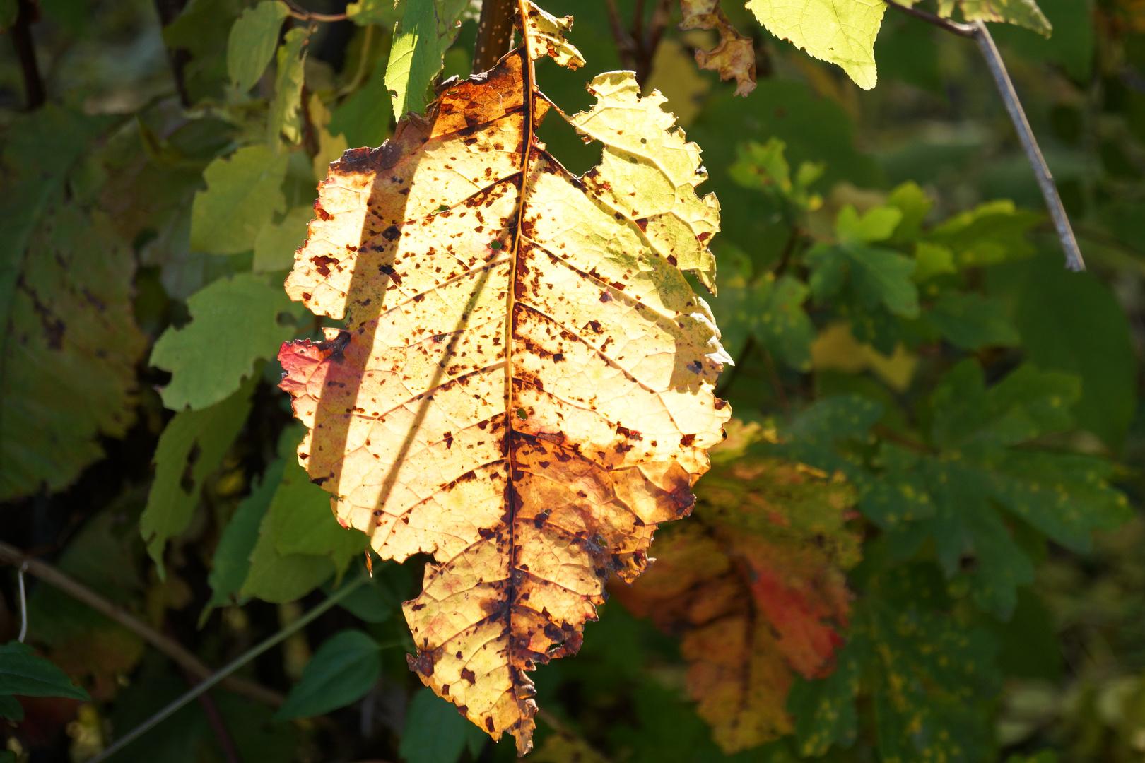 Der Herbst leuchtet...
