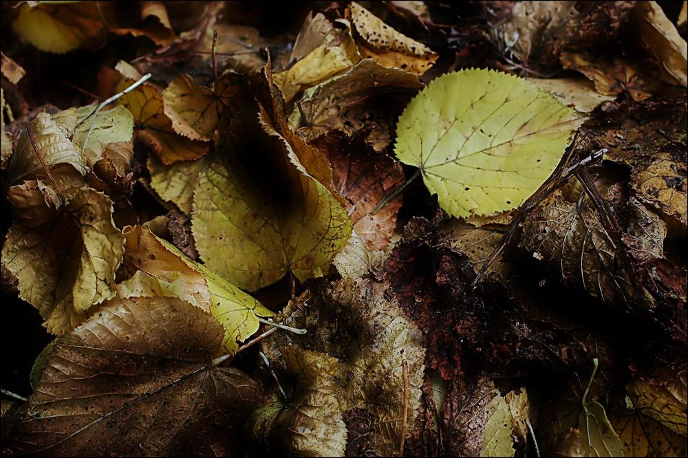 Der Herbst macht die Blätter bunt