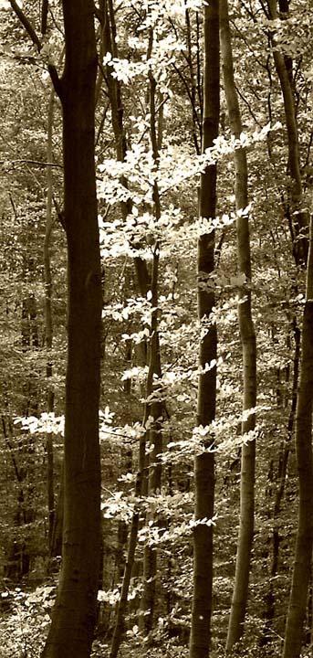 Der Herbst mal monochrom