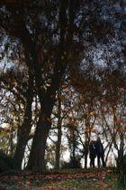 Der Herbst mal romantisch