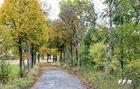 Der Herbst mir seiner wundervollen Farbenpracht.