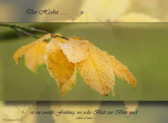 Der Herbst... ! Mitmachaction !