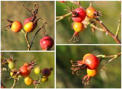 Der Herbst naht