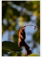 Der Herbst rückt näher!