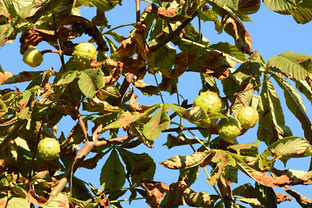 Der Herbst schenkt uns vielerlei Früchte III
