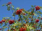 Der Herbst schenkt uns vielerlei Früchte VII