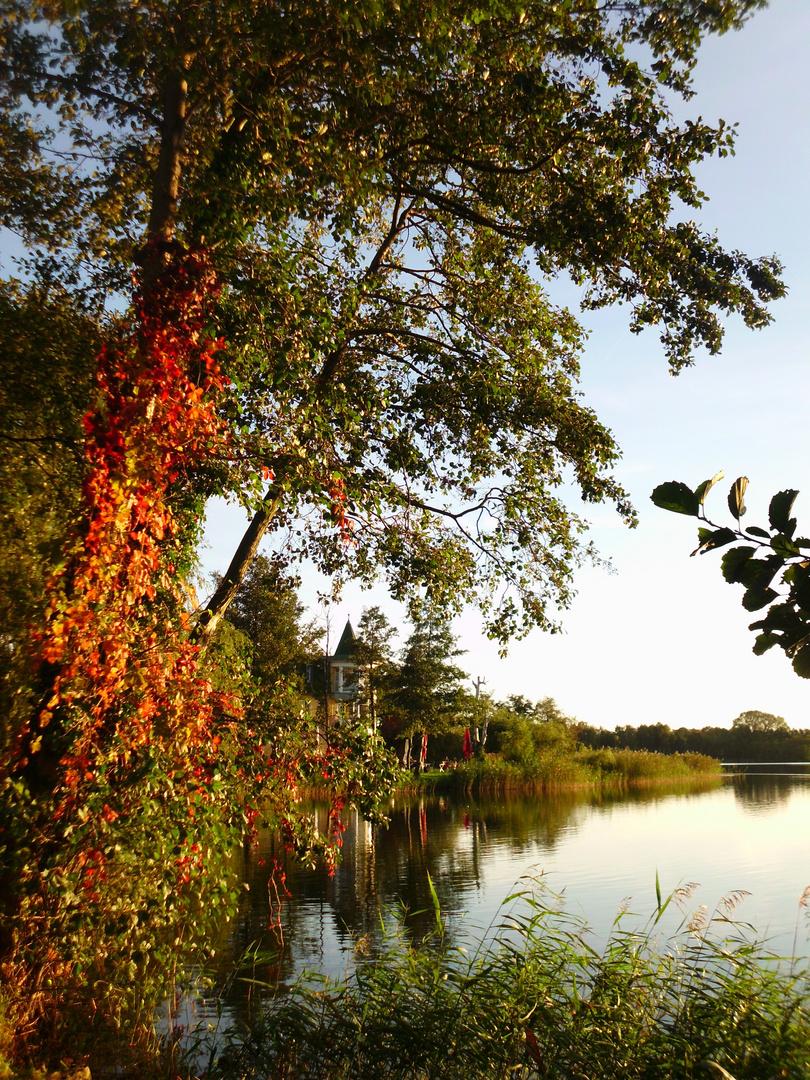 Der Herbst steht auf der Leiter ...