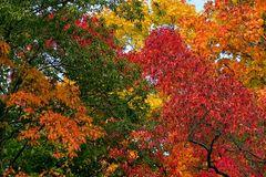 Der Herbst steht auf der Leiter...