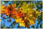 Der Herbst steht auf der Leiter und malt ...