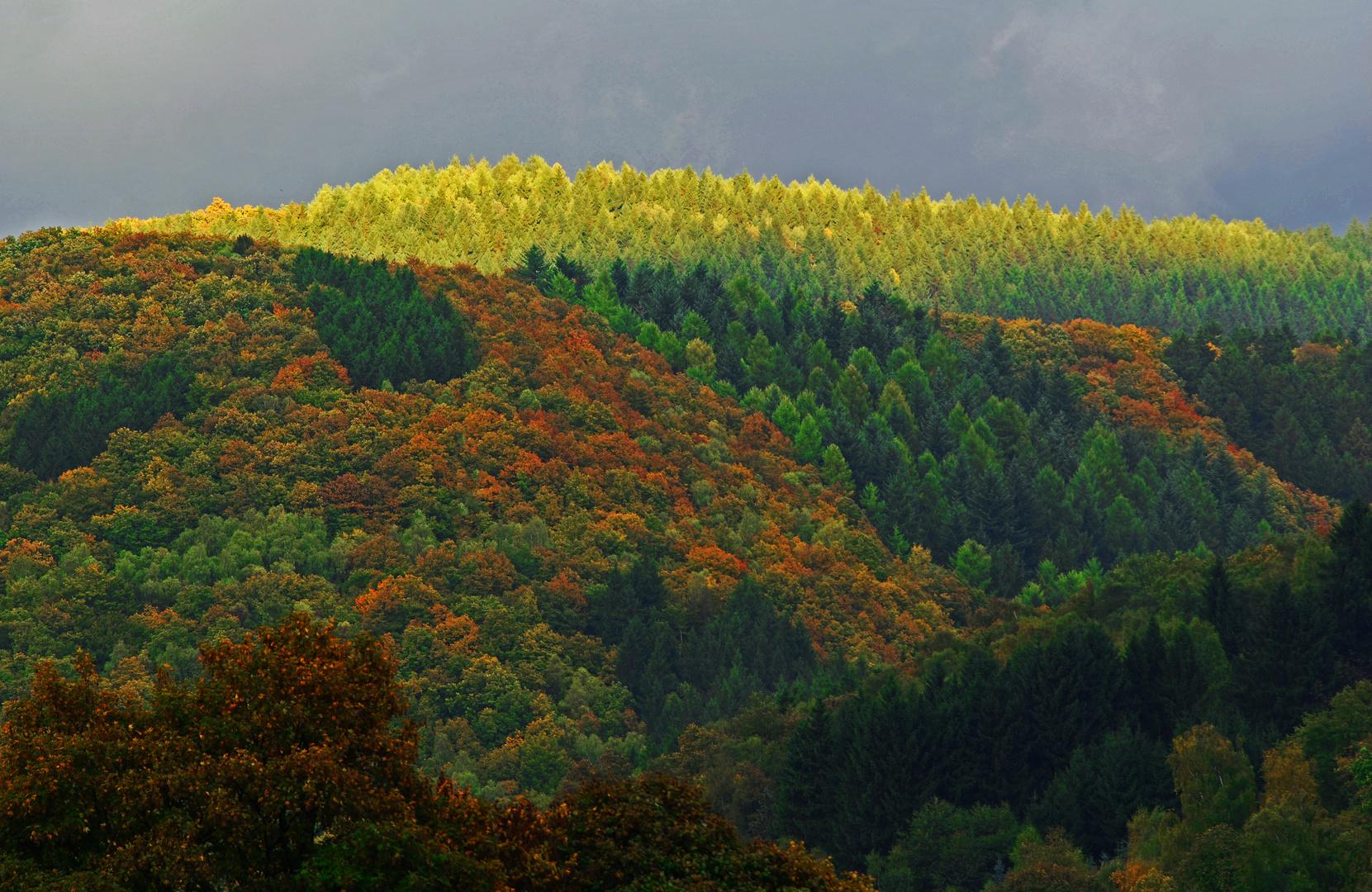 Der Herbst steht auf der Leiter und malt die Blätter an ...