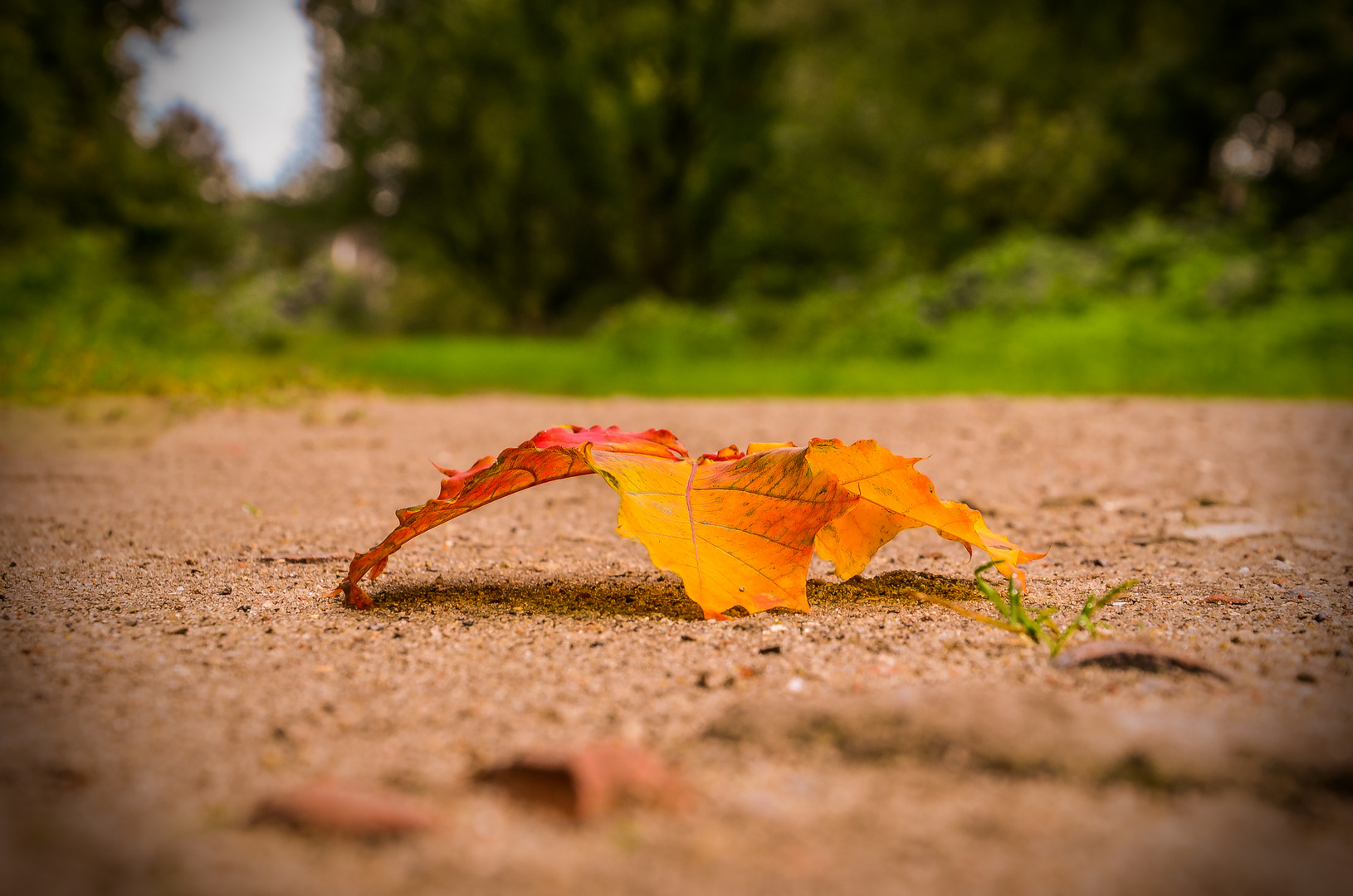 Der Herbst steht vor der Tür.