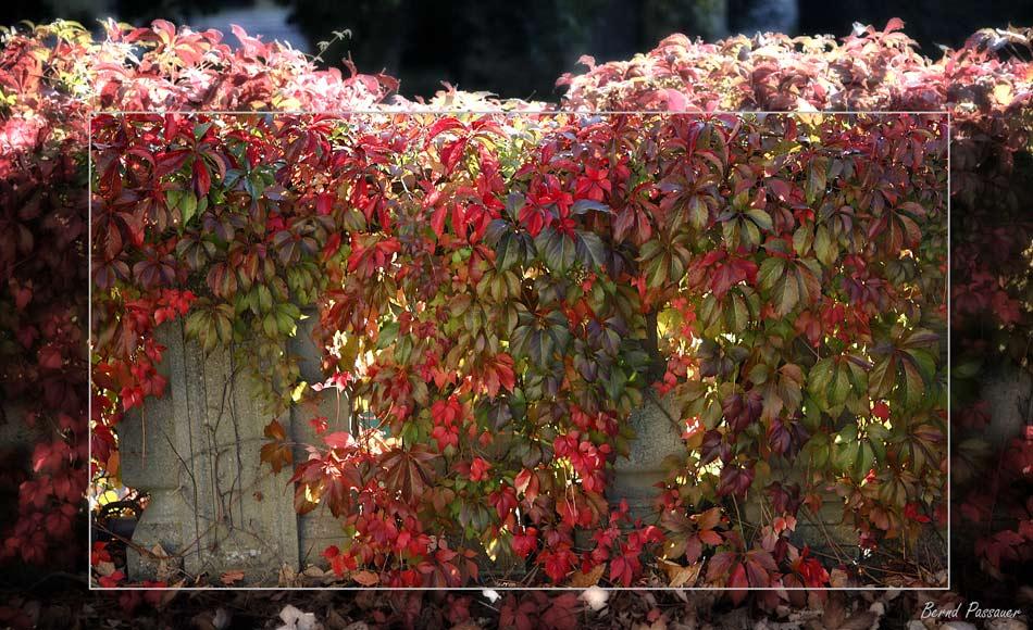 Der Herbst tastet sich vor ...