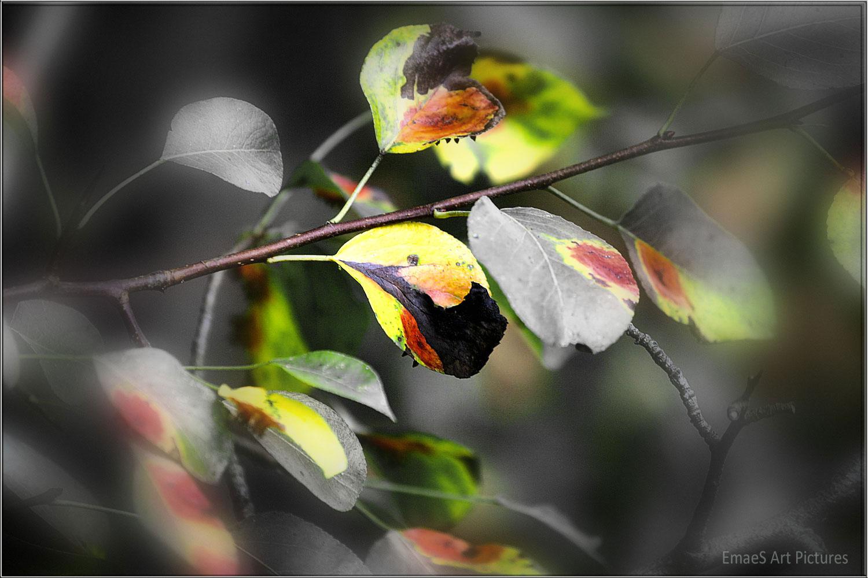 ** Der Herbst trägt deutsche Farben **