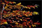 Der Herbst treibt's ....