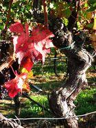 Der Herbst und das Herbsten (Weinlese) beginnt