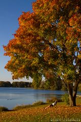 Der Herbst und seine Besucher
