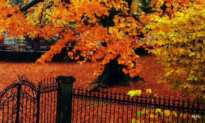 der Herbst und seine Farben..