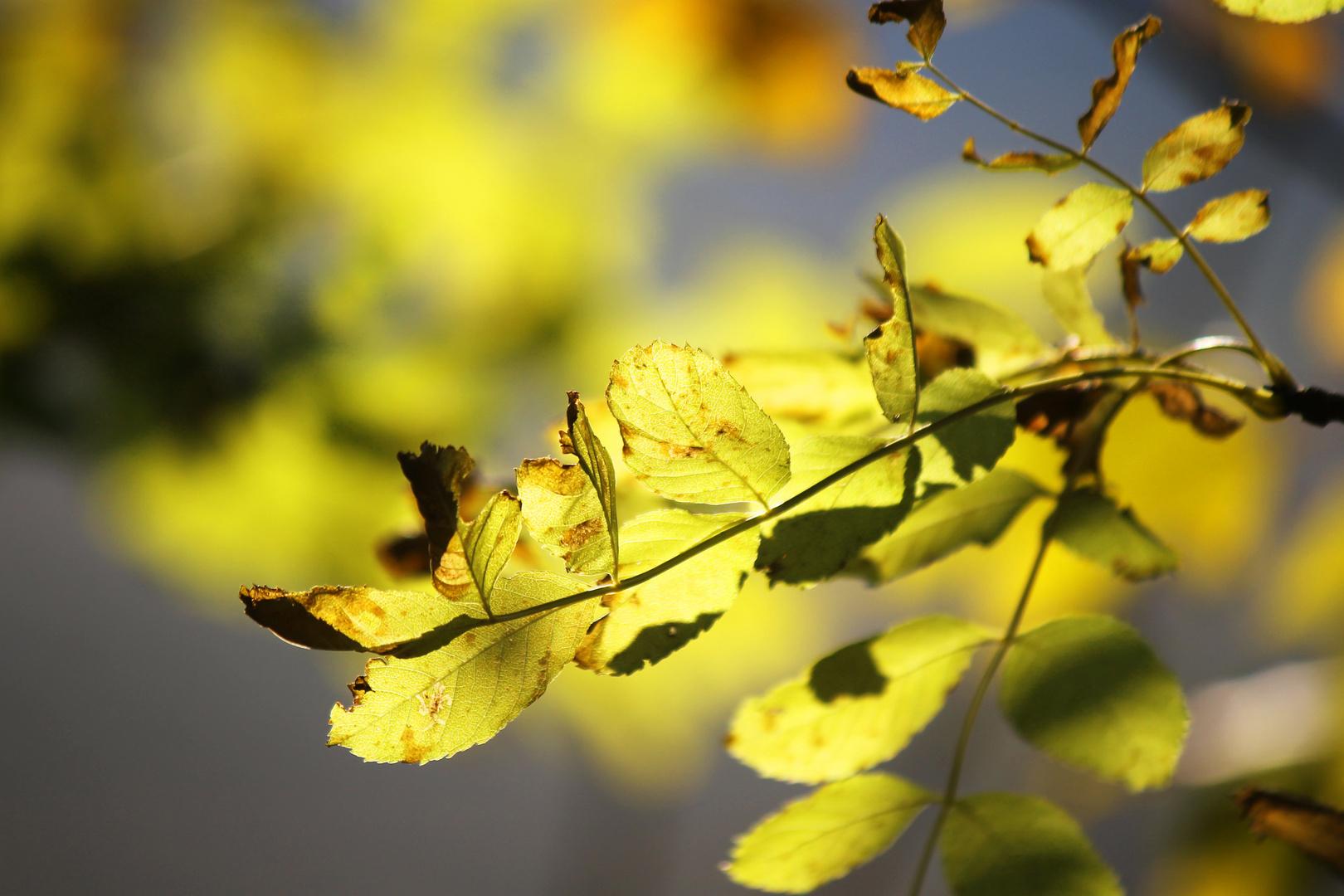 Der Herbst und seine Kunstwerke