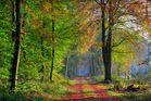 Der Herbst und seine schönen Farben.