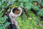 Der Herbst versteckt sich
