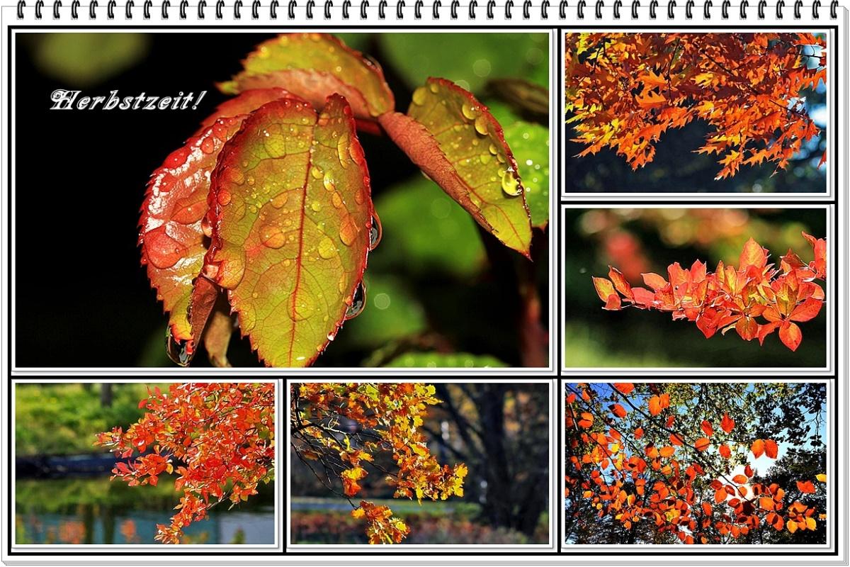der Herbst von seiner schönsten Seite...