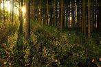 Der Herbst Wald.