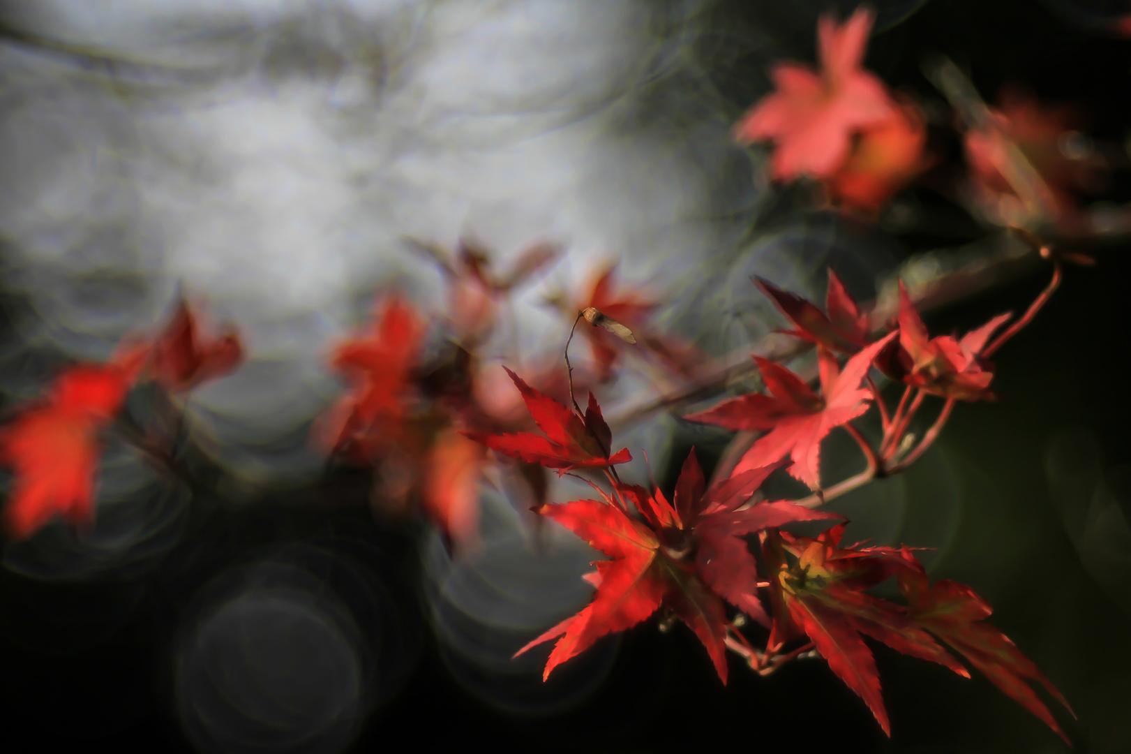 Der Herbst wird rot