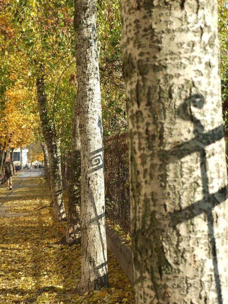 Der Herbst wirft seine Schatten Nr. 7