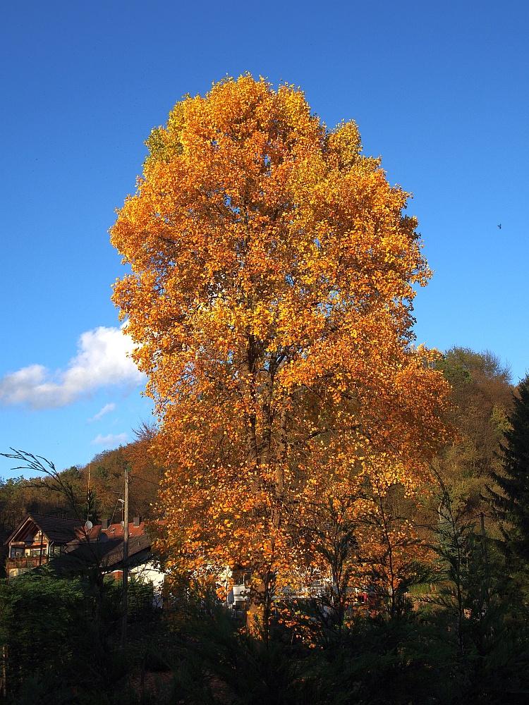 Der Herbst zeigt sich in seiner Farbenpracht.
