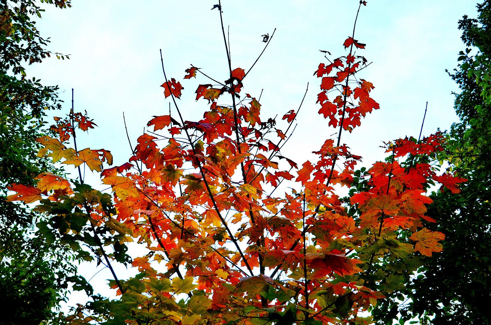 Der Herbst zeigt sich von seiner freundlichen Seite .....
