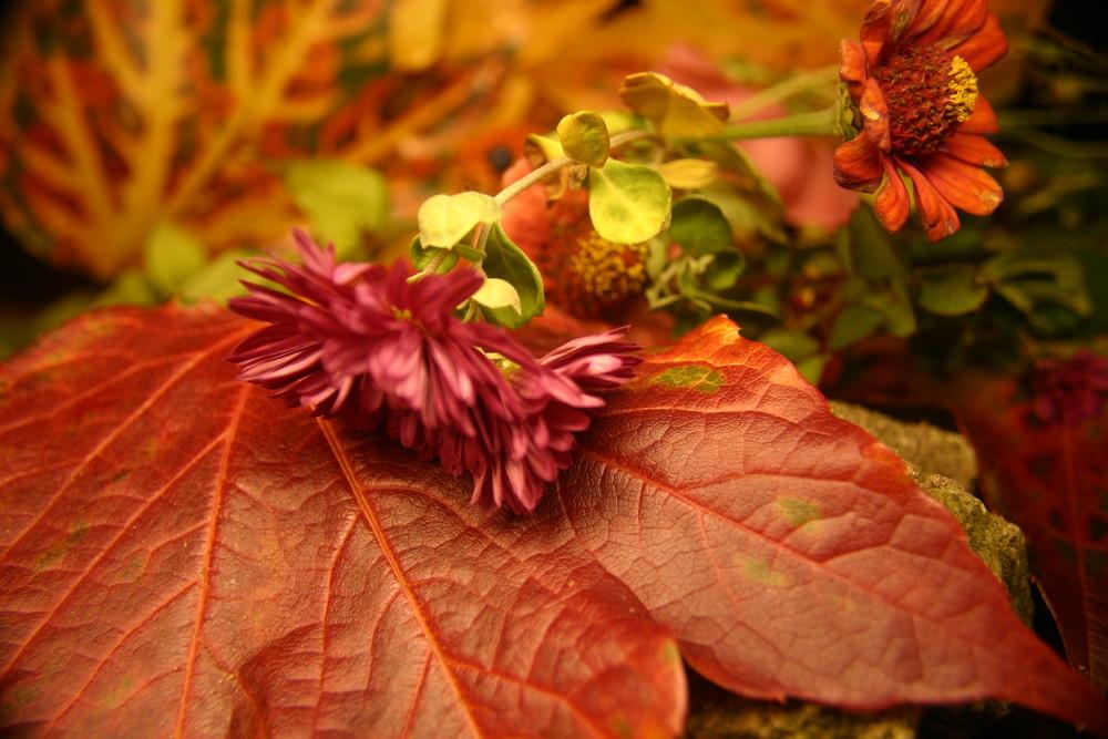 Der Herbst zeigt sich von seiner schönsten Seite
