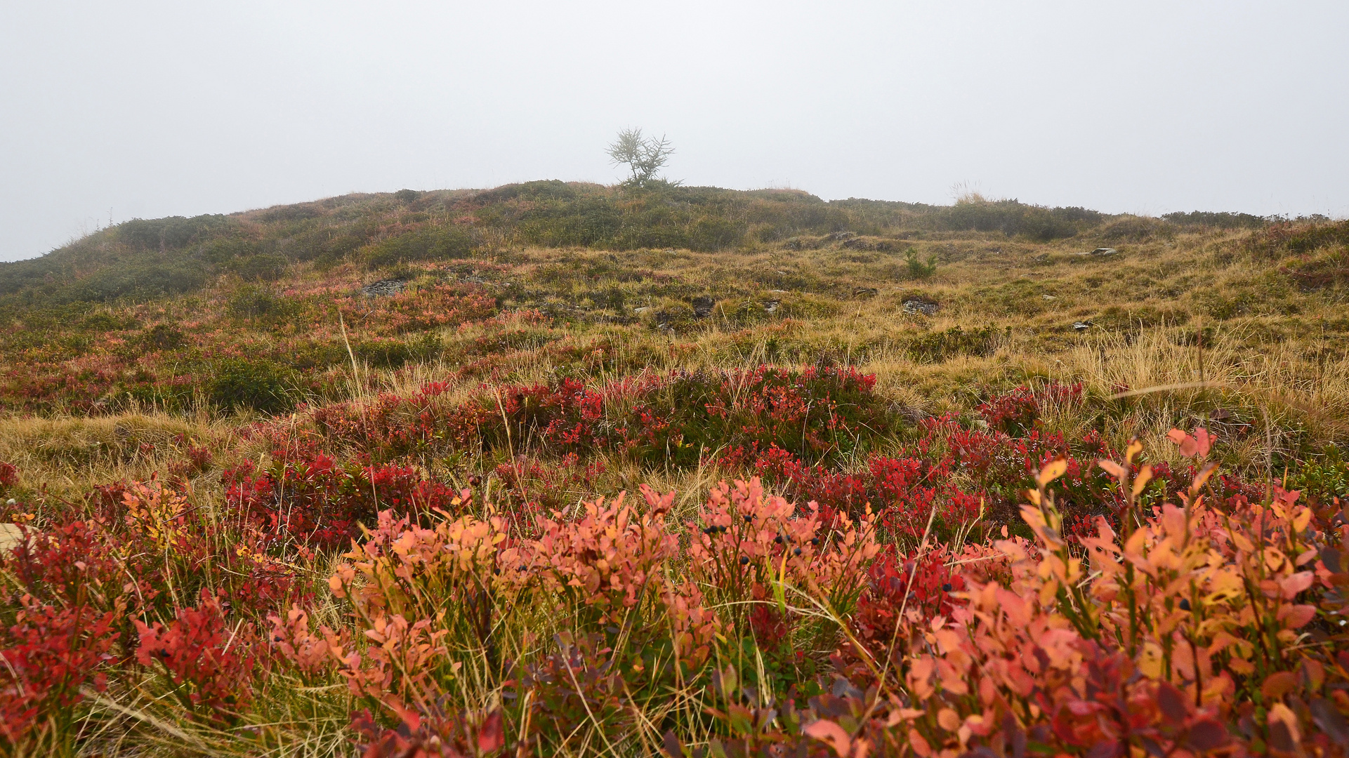Der Herbst zieht ein...