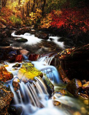 Der Herbstspaziergang