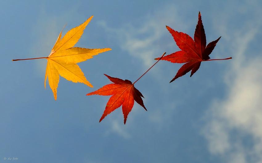 Der Herbststurm