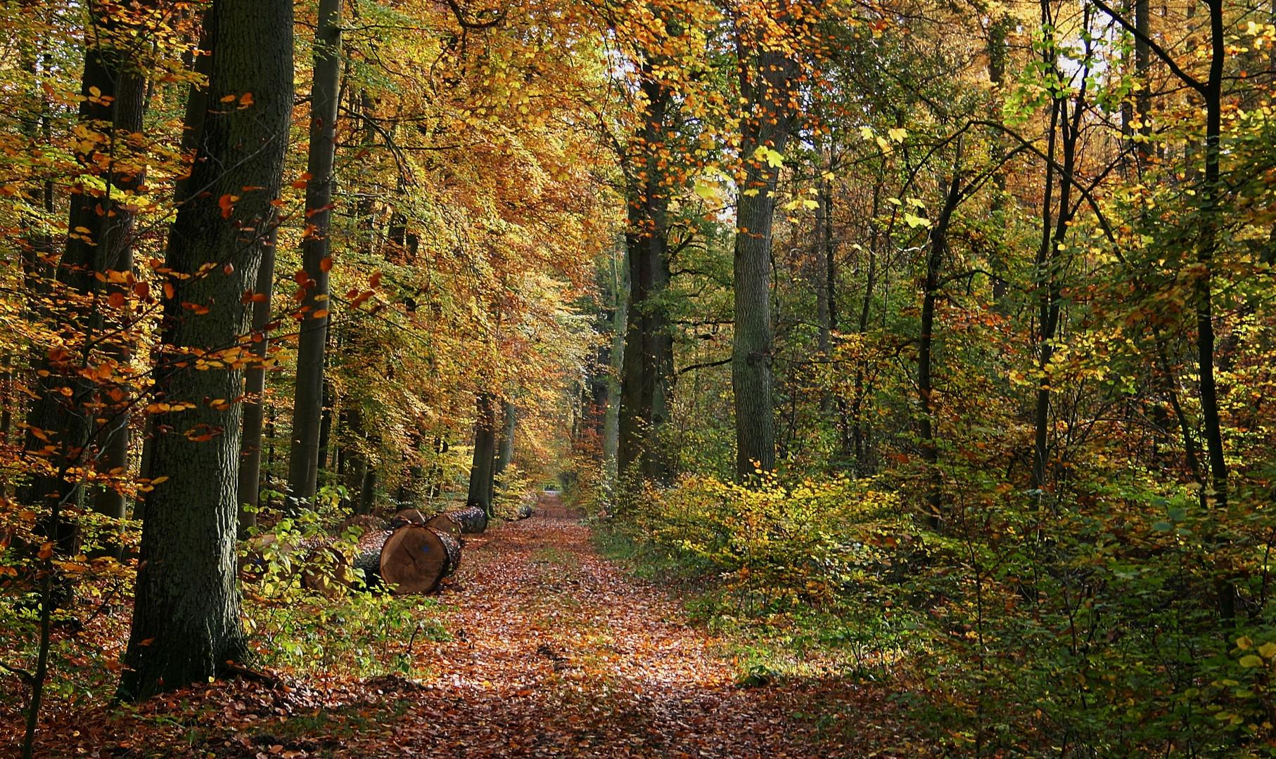 Der Herbstwald .....