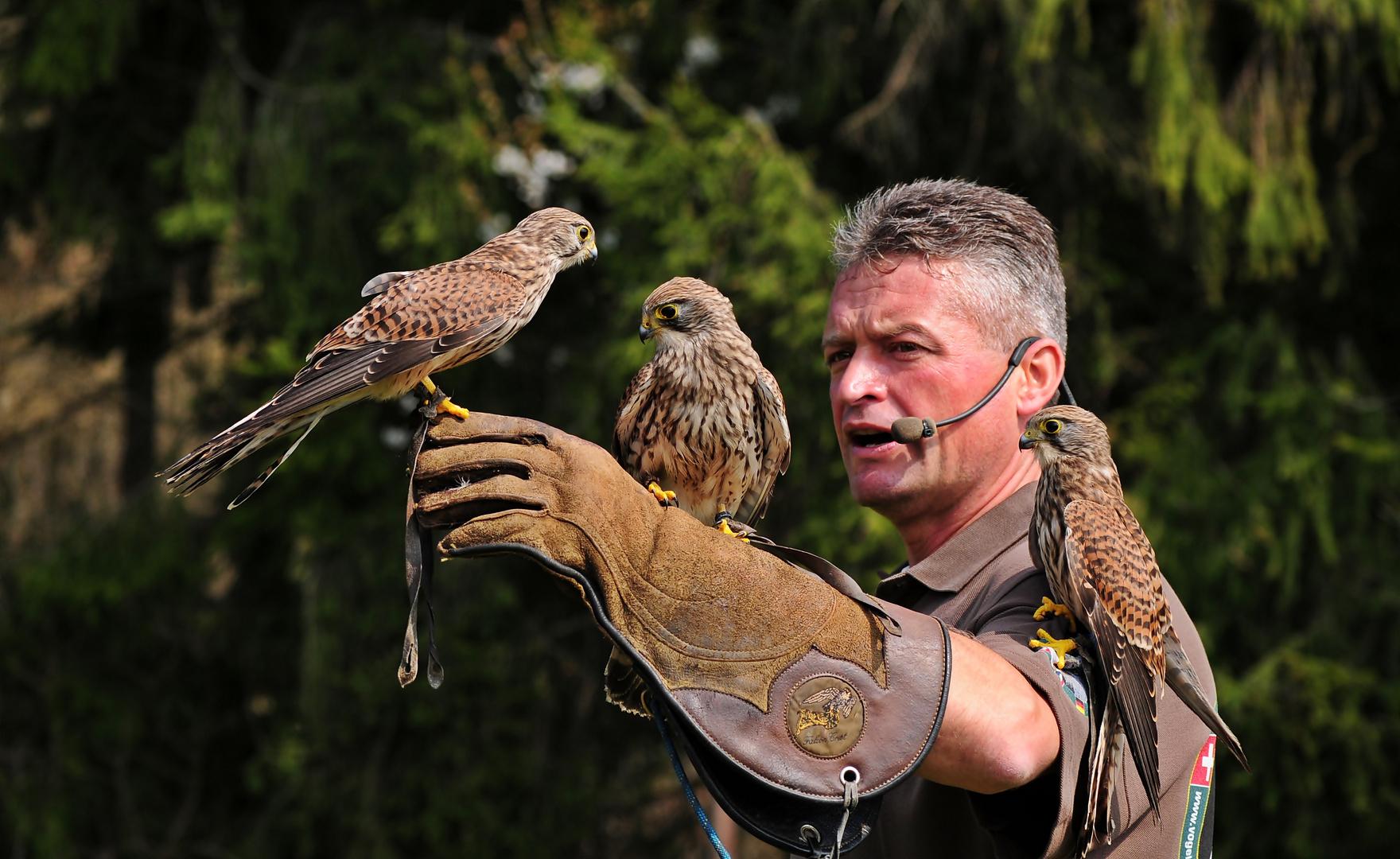 Der Herr der Vögel (1)