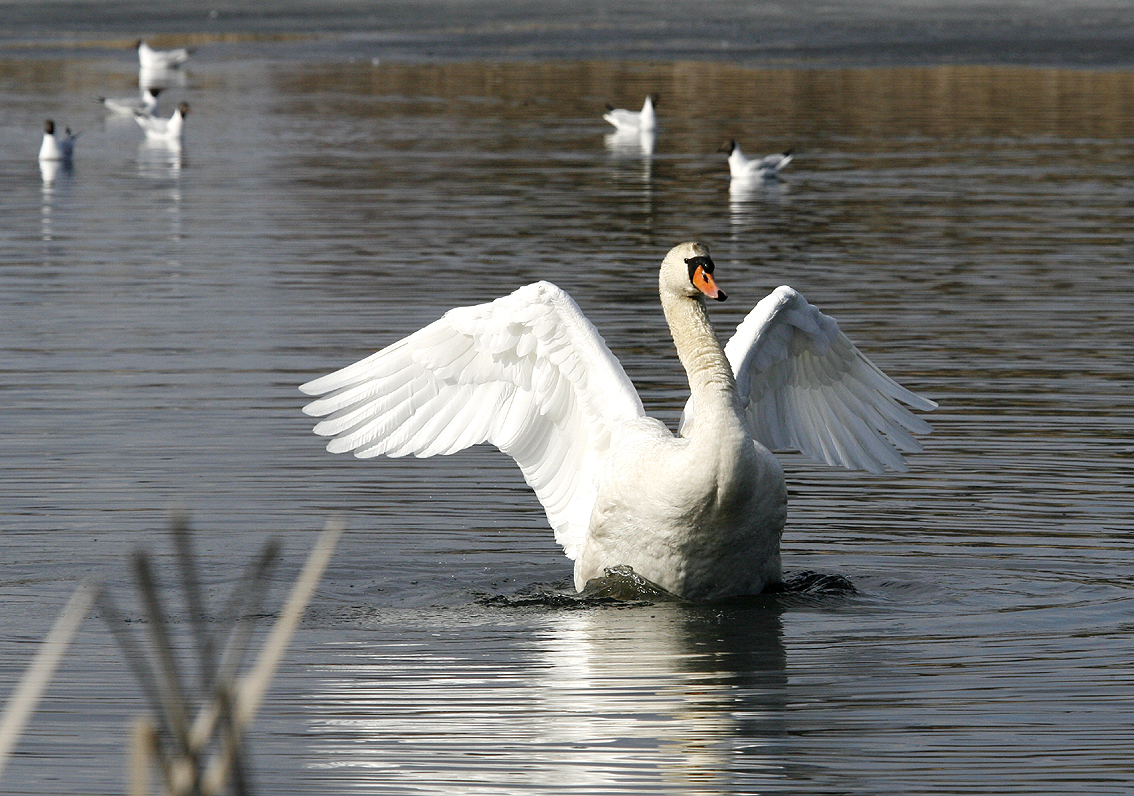Der Herrscher des Vogelsees