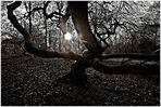 der Hexenwald, 2
