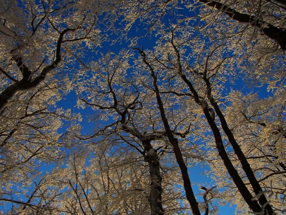 """""""Der Himmel ist nicht weniger blau, weil der Blinde ihn nicht sieht."""""""