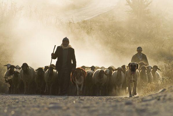 Der Hirte und die Herde